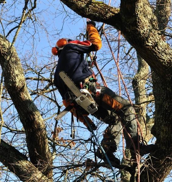 Baumfällen