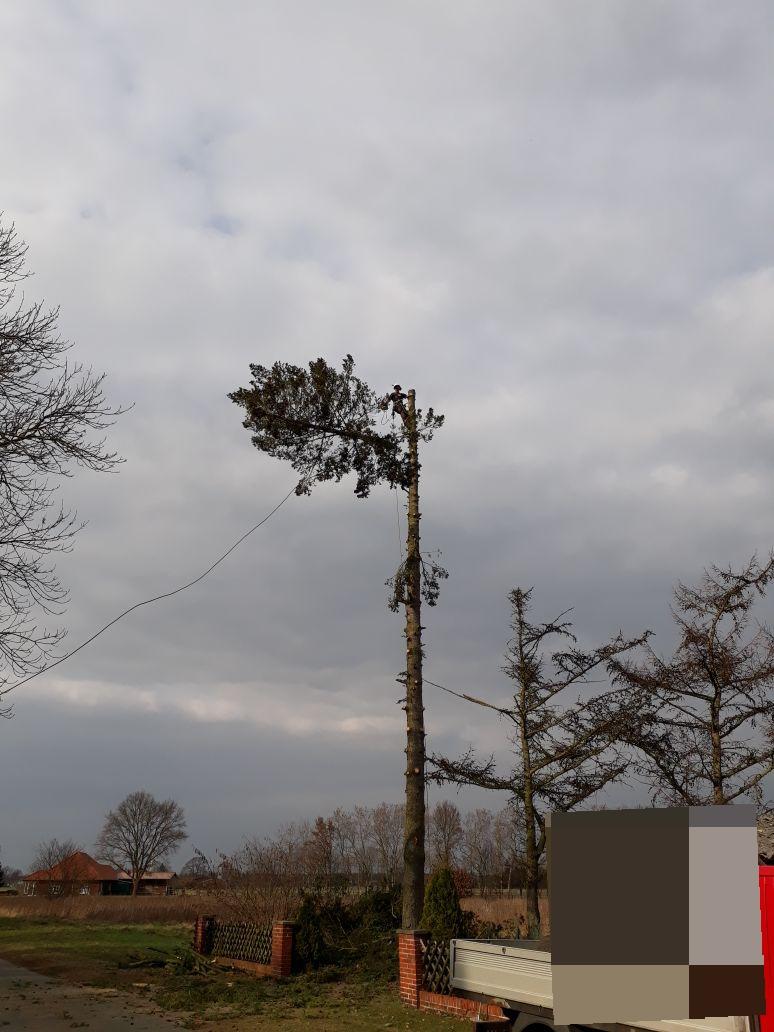 2. Bildergalerie - mammutbaum-lesse.de