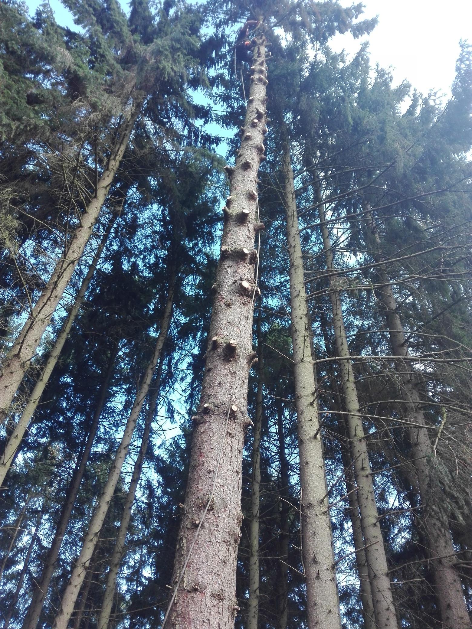 9. Bildergalerie - mammutbaum-lesse.de