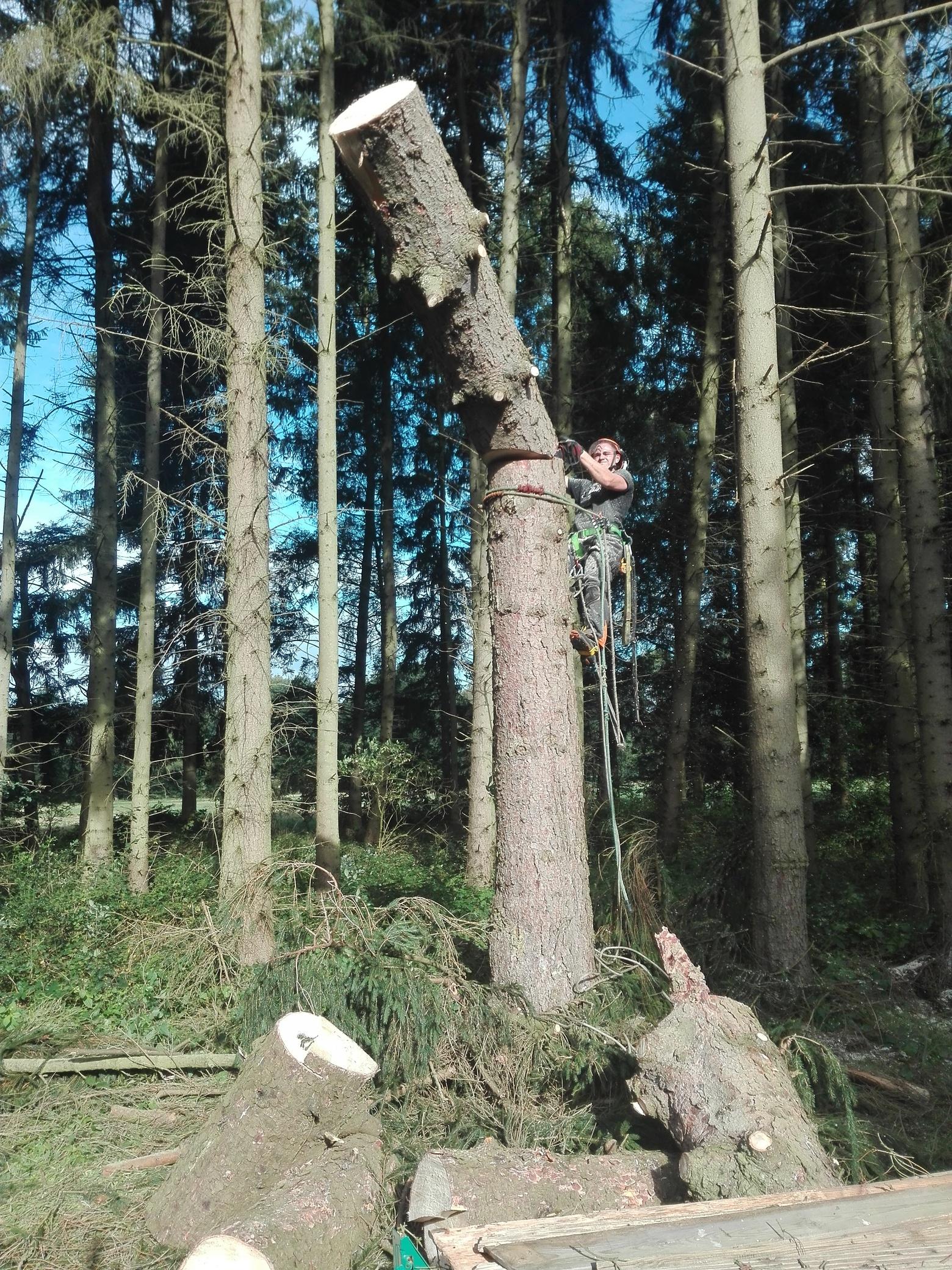 10. Bildergalerie - mammutbaum-lesse.de