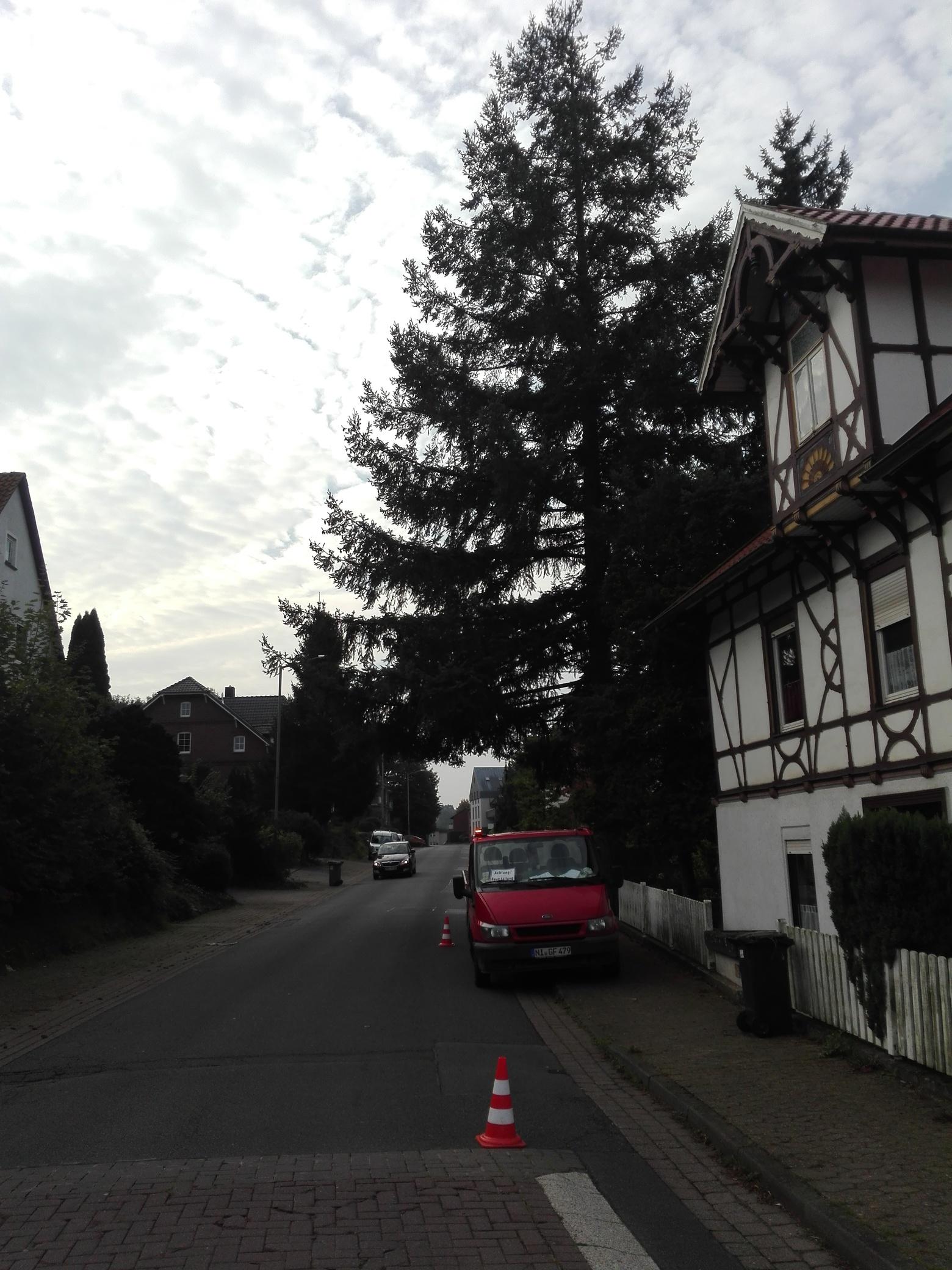 11. Bildergalerie - mammutbaum-lesse.de