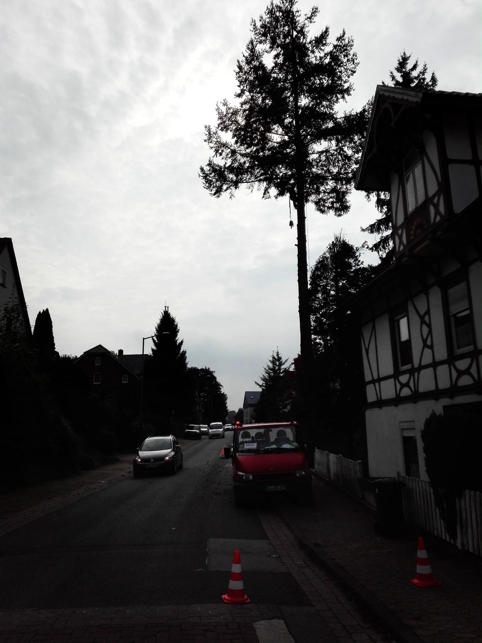 12. Bildergalerie - mammutbaum-lesse.de