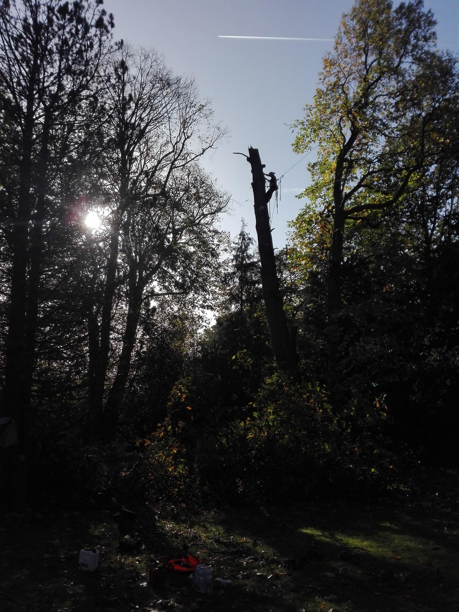 14. Bildergalerie - mammutbaum-lesse.de